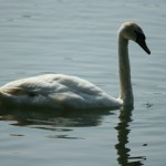 Hanningfield Reservoir – Fishing, Bird Watching, Walking and Nature Tours