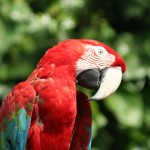 A parrot at the zoo