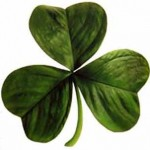 Saint Patrick's Irish clover