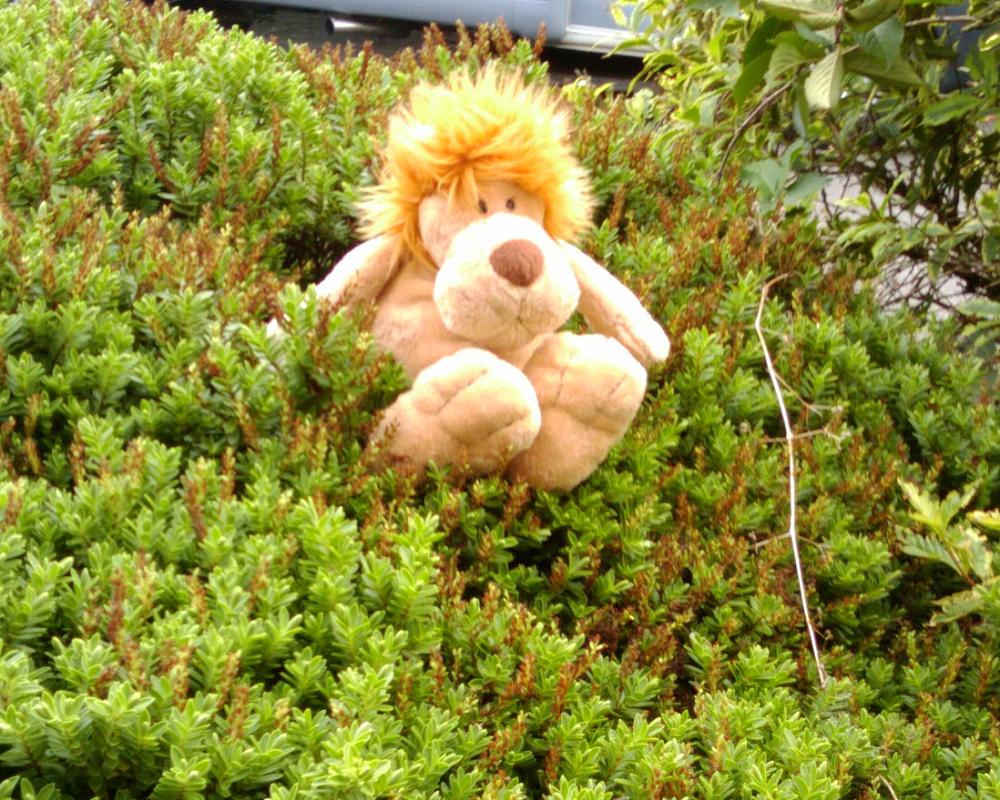 The Essex Lion