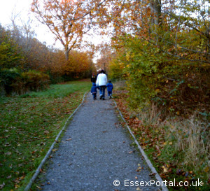 Wheelchair Access on the Easy Route in Norsey Wood