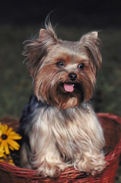 Cute dogy