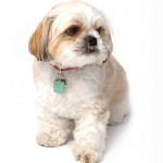 Canine Sassoon