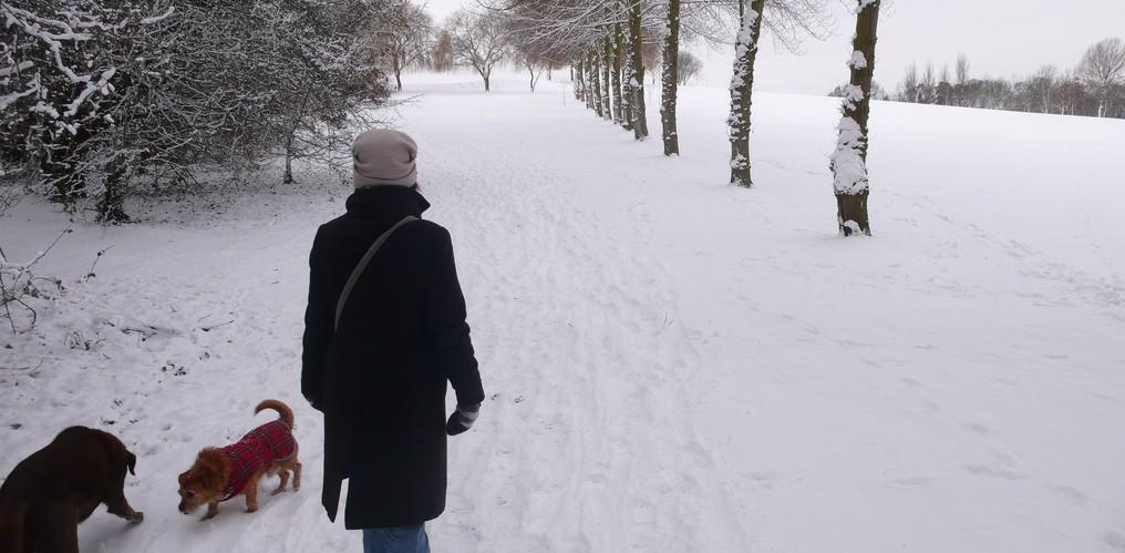 Snowy day in Benfleet, by Tim Regan.