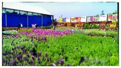 Altons garden centre