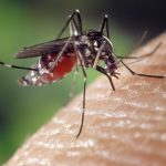 deadly Asian Tiger mosquito