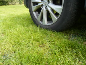 Grass protection