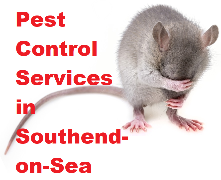 Pest Control Services in Southend-on-Sea
